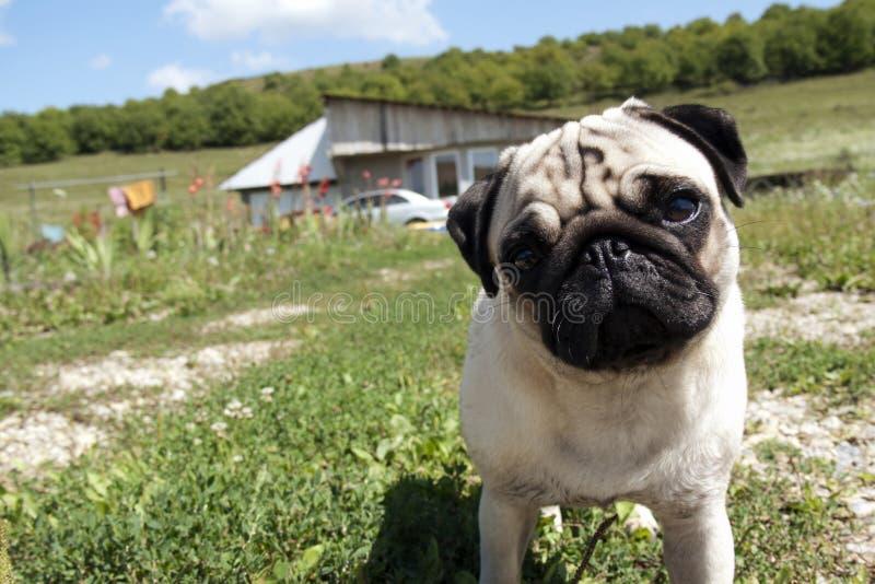 Perro de perrito inquisitivo imágenes de archivo libres de regalías