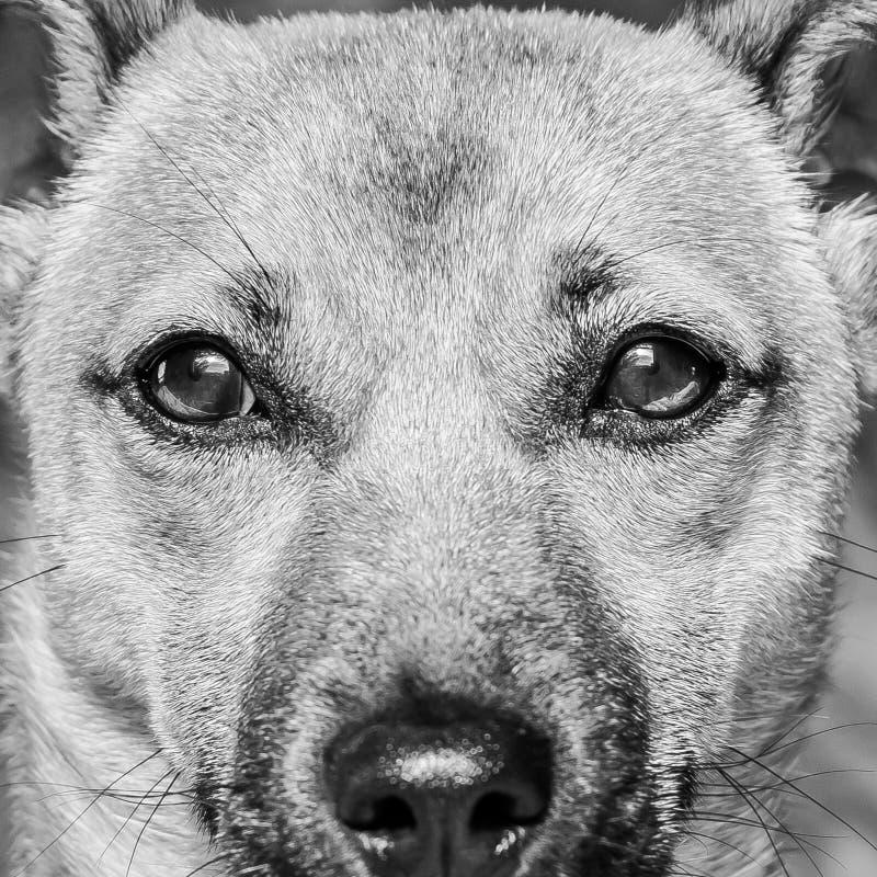Perro de perrito lindo de Brown aislado en el fondo blanco - foto blanco y negro del perro casero del rescate con los ojos adorab foto de archivo