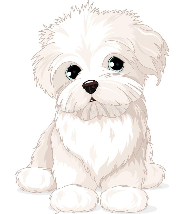 Perro de perrito maltés stock de ilustración