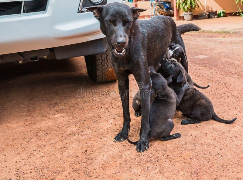 perro de perrito que come la leche materna foto de archivo libre de regalías