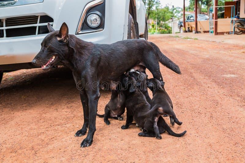 perro de perrito que come la leche materna foto de archivo