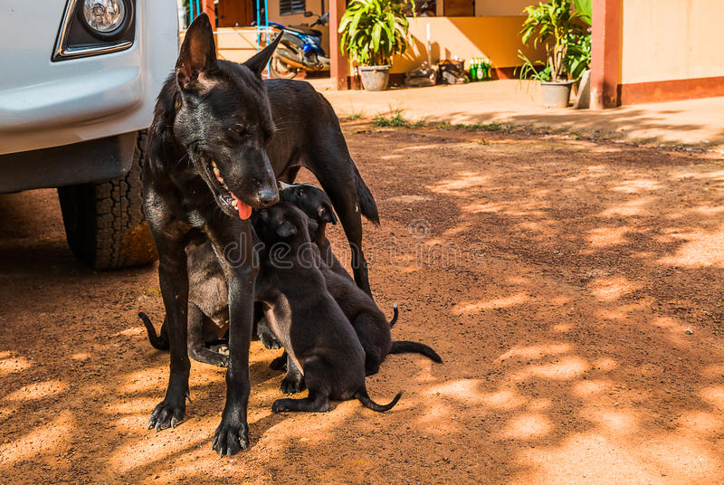 perro de perrito que come la leche materna imágenes de archivo libres de regalías