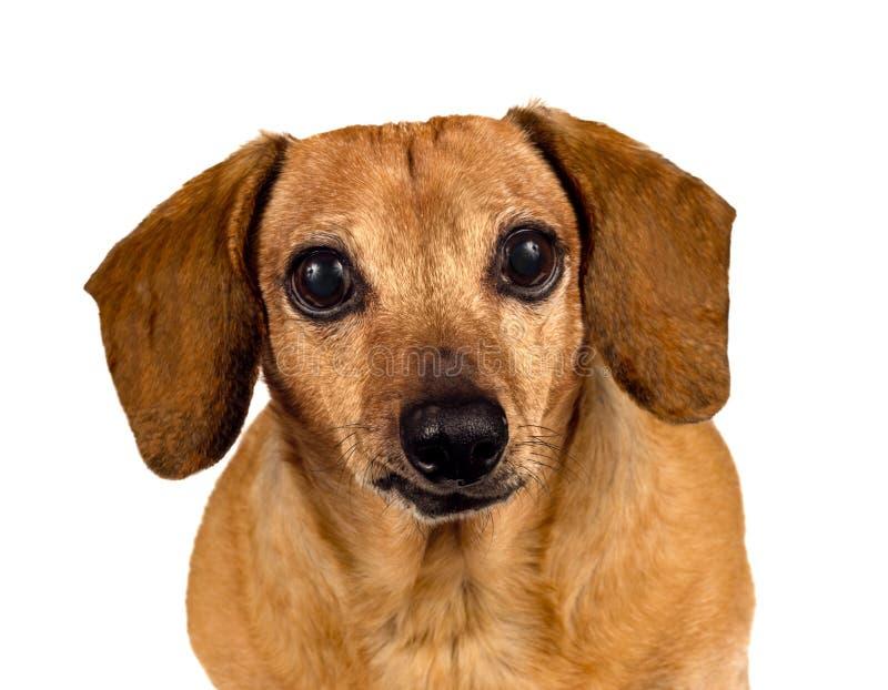Perro de perrito que le mira