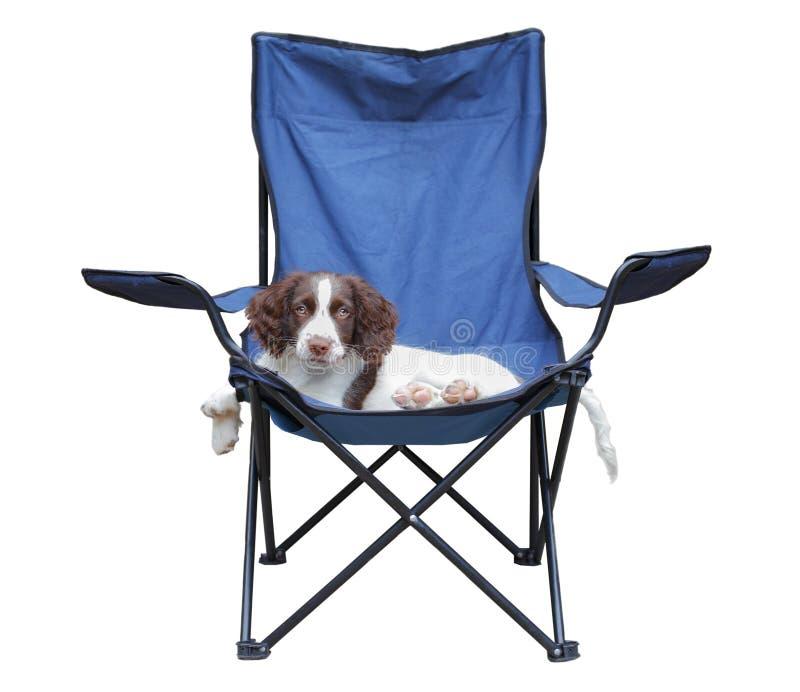 Perro de perrito que se relaja en una silla fotos de archivo