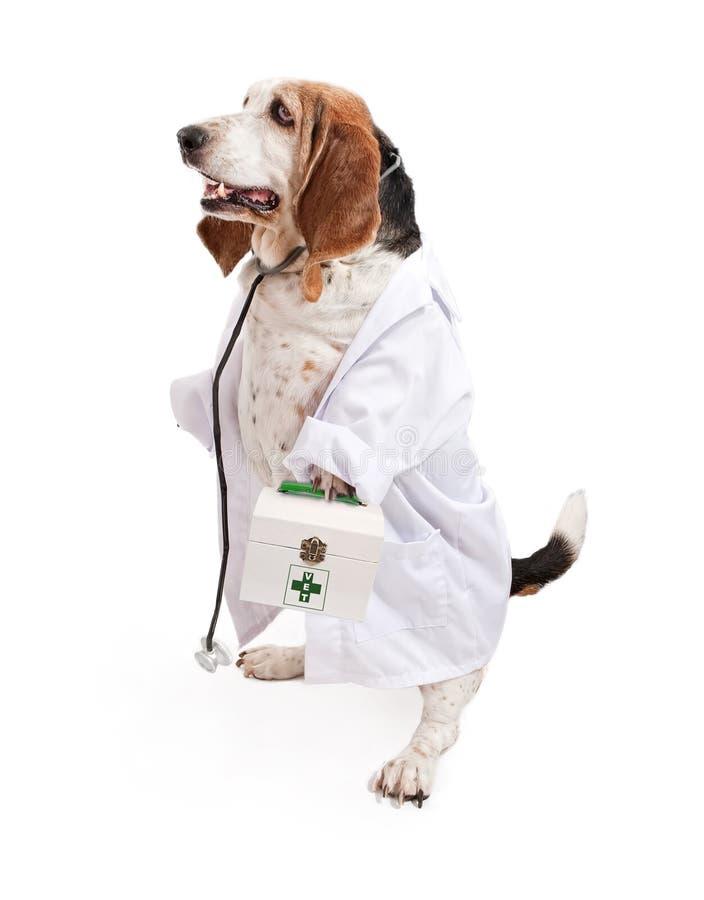 Perro de perro de afloramiento vestido como veterinario imagen de archivo libre de regalías