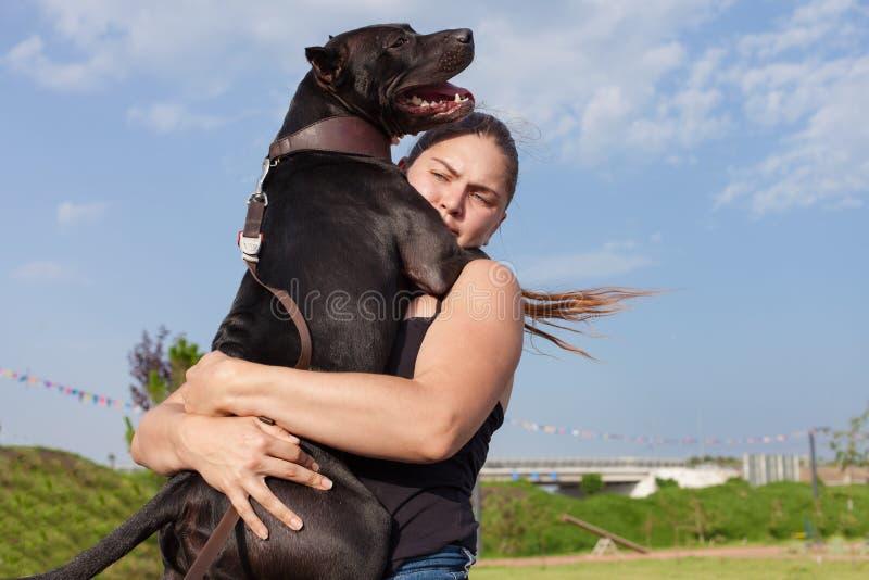 Perro de PitBull Terrier o de Stafforshire Terrier en las manos de un dueño fotografía de archivo