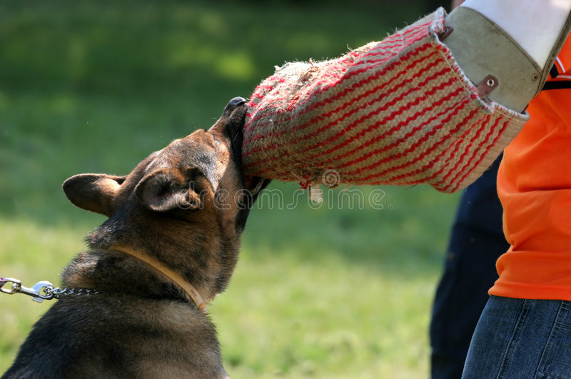 Perro de policía fotos de archivo