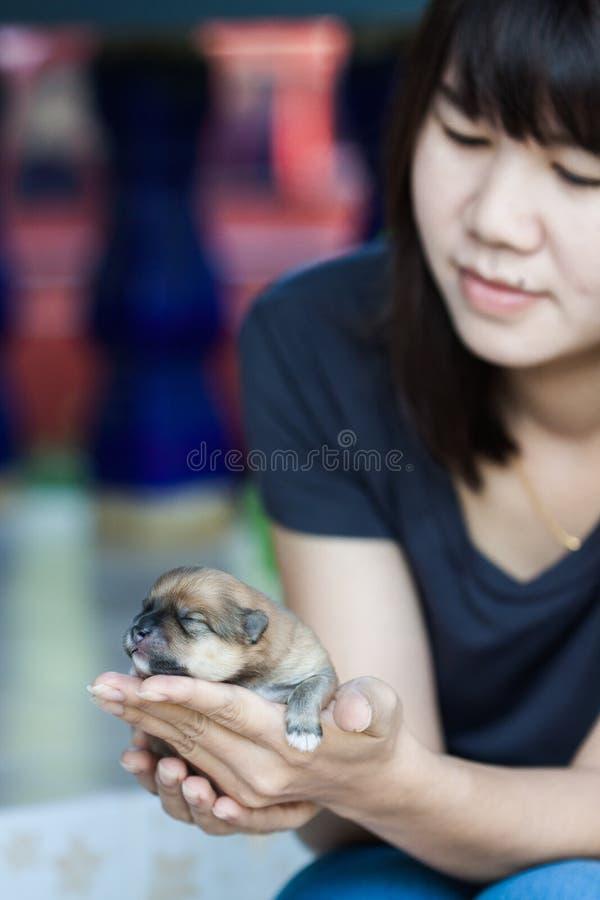 Perro de Pomeranian con las mujeres foto de archivo libre de regalías