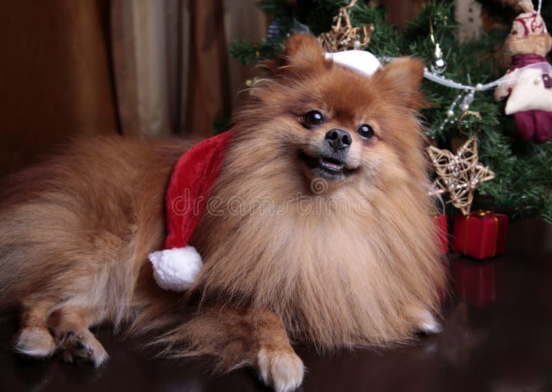 Perro de Pomeranian en un sombrero de Santa Claus que se sienta debajo del Cristo foto de archivo libre de regalías