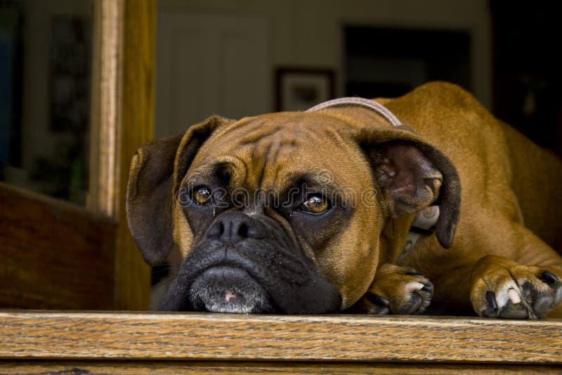 Perro de reclinación imagen de archivo libre de regalías
