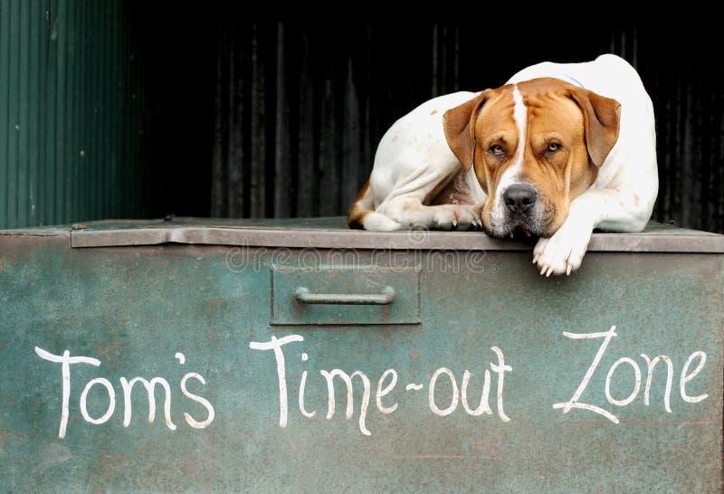 Perro de reclinación foto de archivo