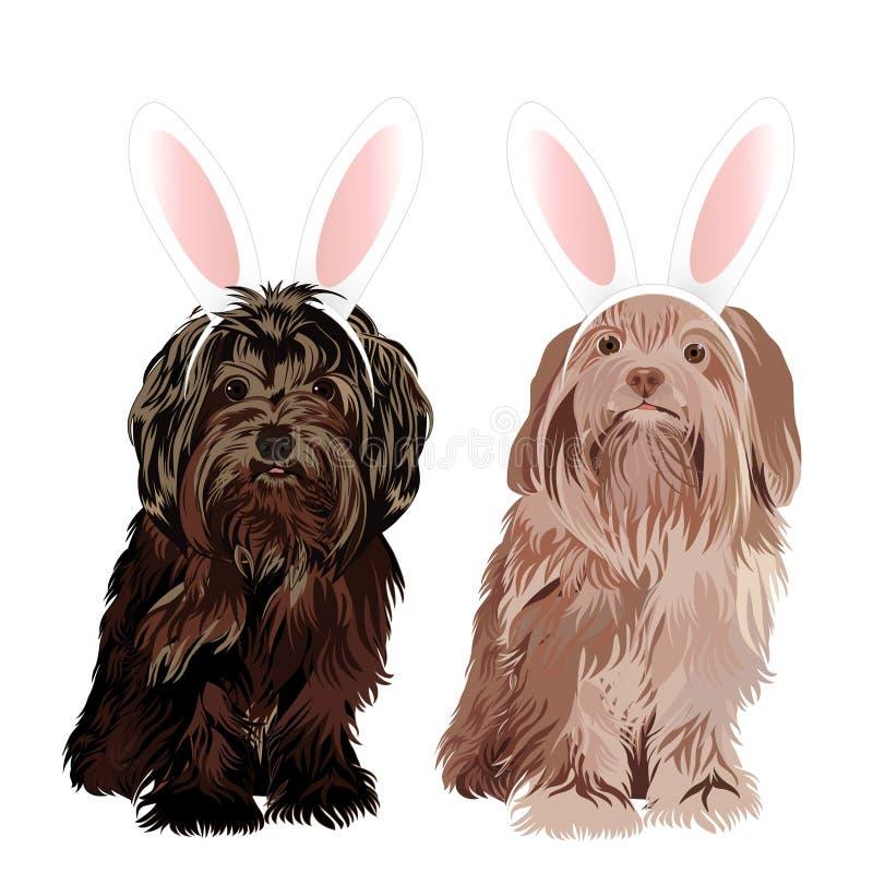 Perro de revestimiento vestido con los oídos de pascua del conejito aislados en el fondo blanco ilustración del vector