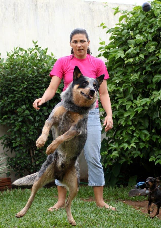 Perro de salto del ganado con la mujer   imágenes de archivo libres de regalías