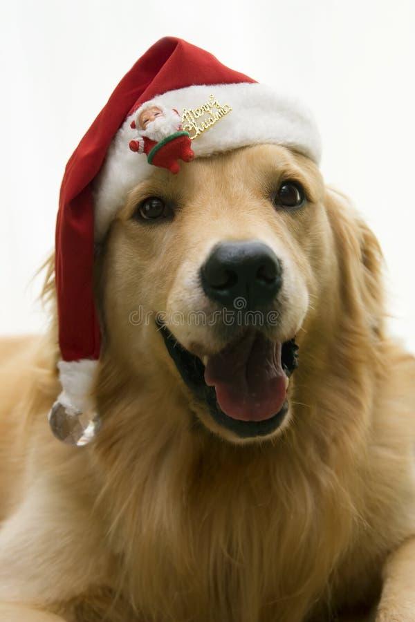 Perro de santa de la Navidad imagen de archivo