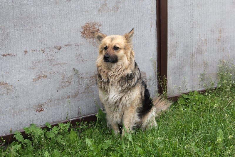 Perro de yarda que se sienta cerca de la cerca de su casa fotos de archivo