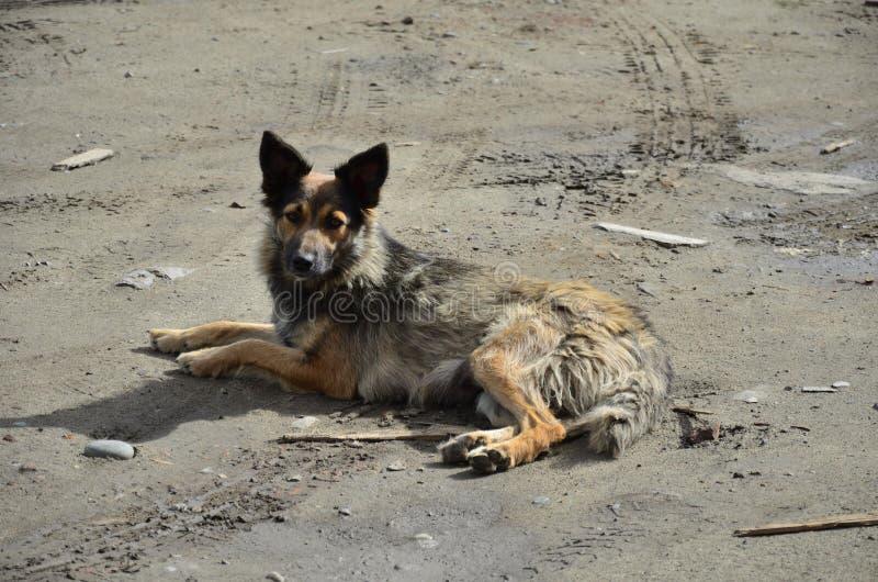 Perro de yarda sin hogar fotografía de archivo libre de regalías