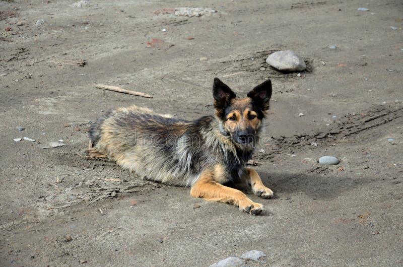 Perro de yarda sin hogar fotos de archivo libres de regalías