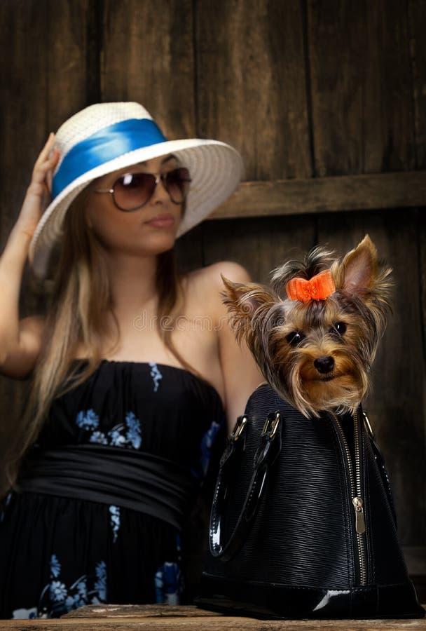 Perro de Yorkshire Terrier en bolso imagen de archivo libre de regalías