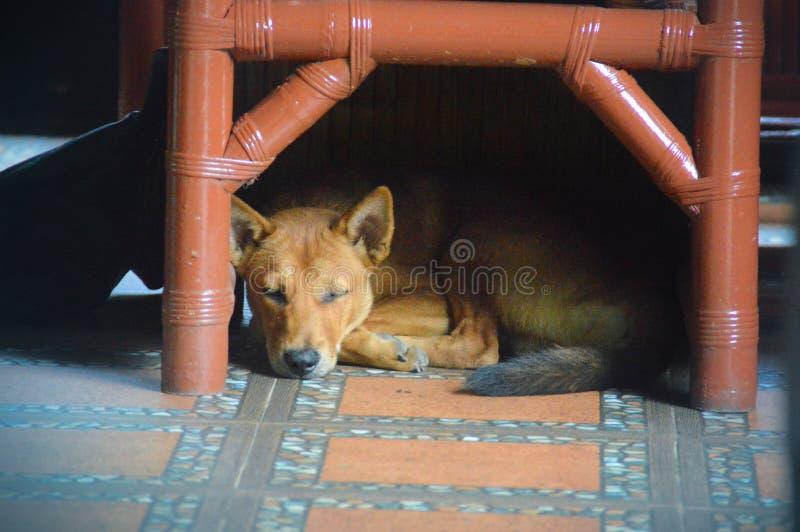 Perro debajo de una silla foto de archivo libre de regalías
