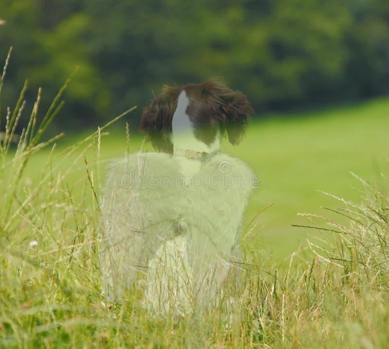 Perro del ángel de la pérdida del animal doméstico