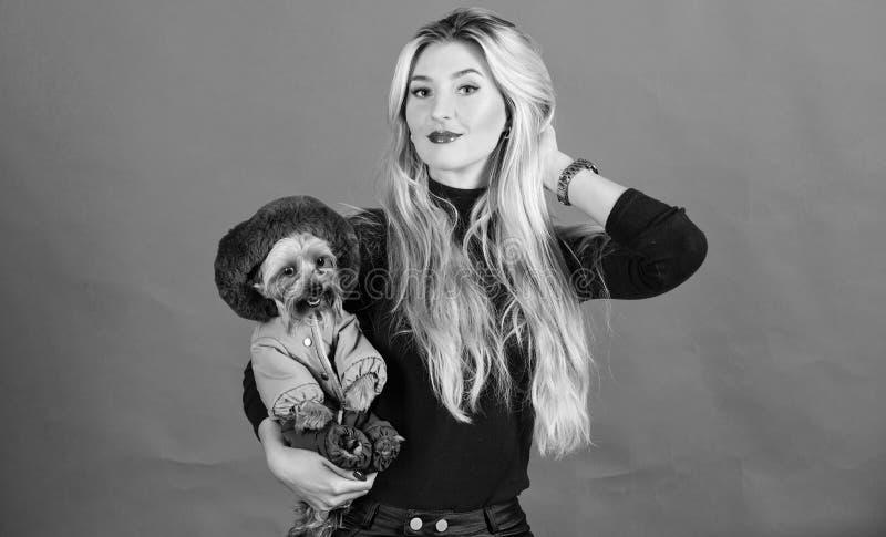 Perro del abrazo de la muchacha peque?o en capa La mujer lleva el terrier de Yorkshire Aseg?rese de que el perro sienta c?modo en fotos de archivo