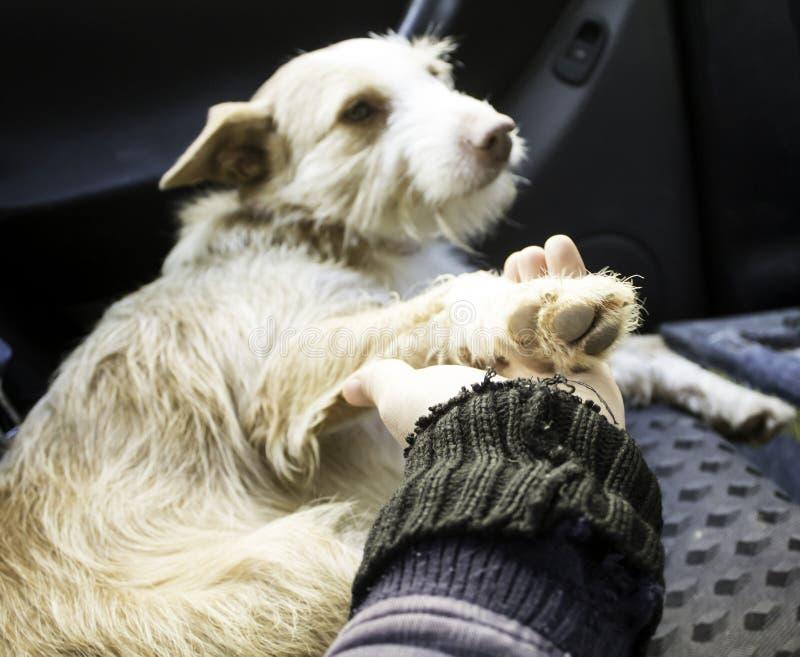 Perro del abrazo de la mujer foto de archivo libre de regalías
