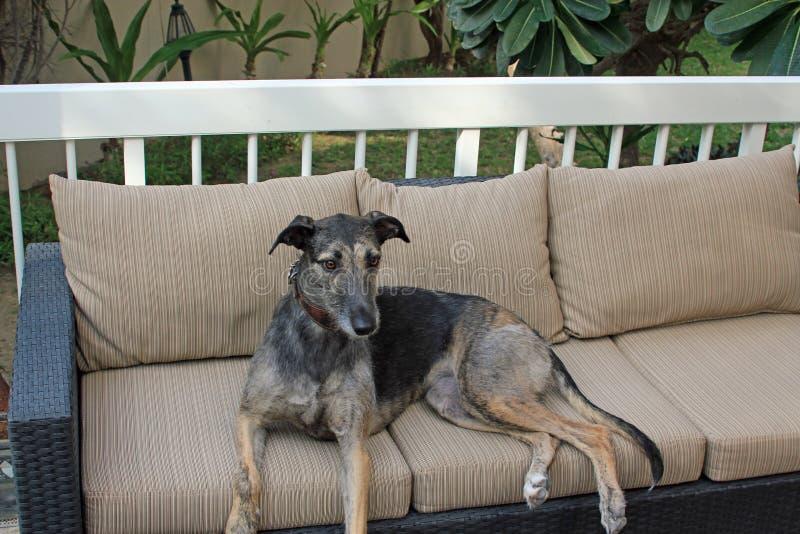 Perro del acechador que se sienta afuera imágenes de archivo libres de regalías