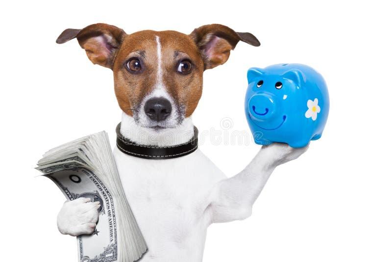 Perro del ahorro del dinero imagenes de archivo