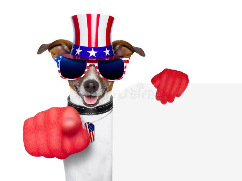 Perro del americano de los E.E.U.U. imagen de archivo