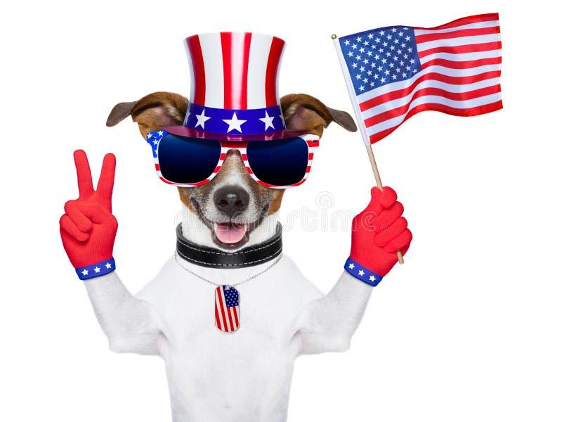 Perro del americano de los E.E.U.U. fotos de archivo libres de regalías
