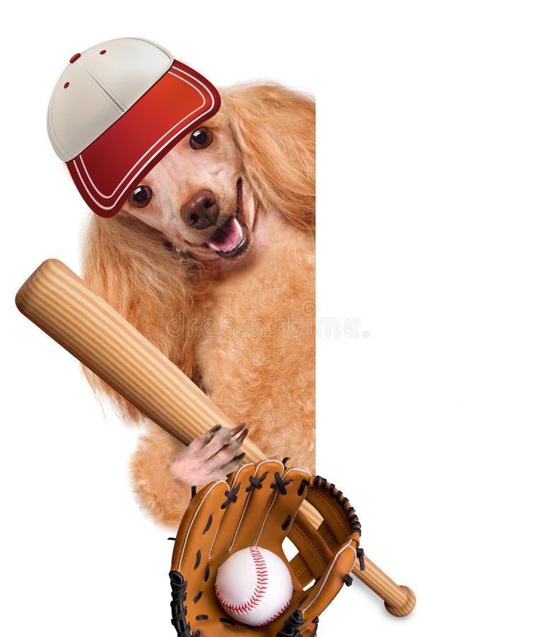 Perro del béisbol con un béisbol foto de archivo libre de regalías