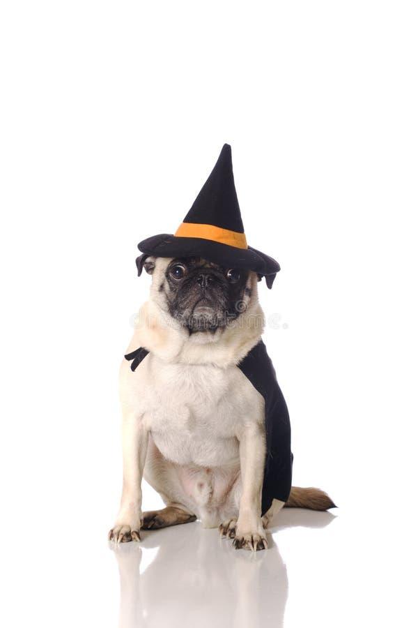 Perro del barro amasado en traje de la bruja fotos de archivo