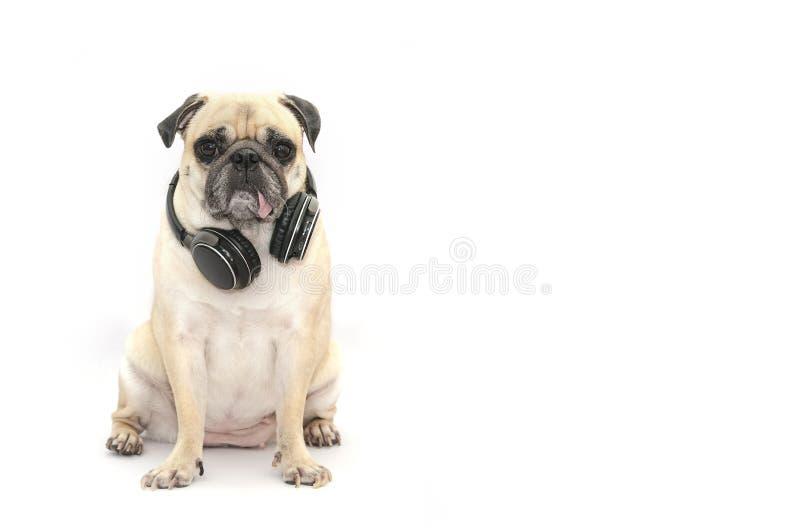 Perro del barro amasado que escucha la música con el auricular del bluetooth en la parte posterior del blanco fotos de archivo libres de regalías