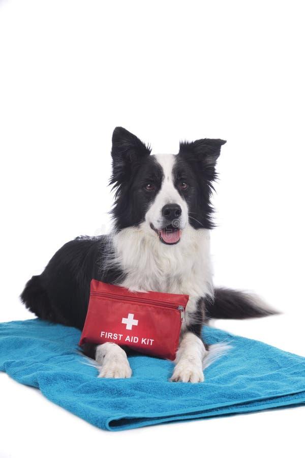 Perro del border collie con el equipo de primeros auxilios foto de archivo libre de regalías