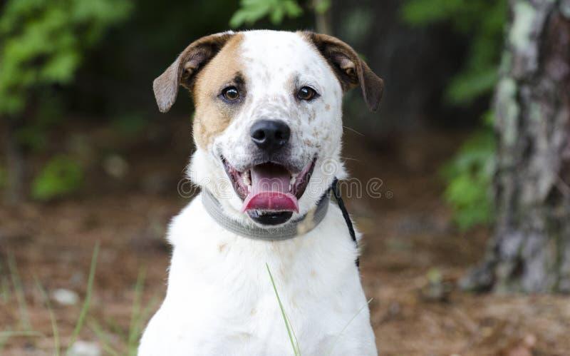 Perro del perro callejero con la lengua del jadeo, fotografía del rescate del animal doméstico foto de archivo