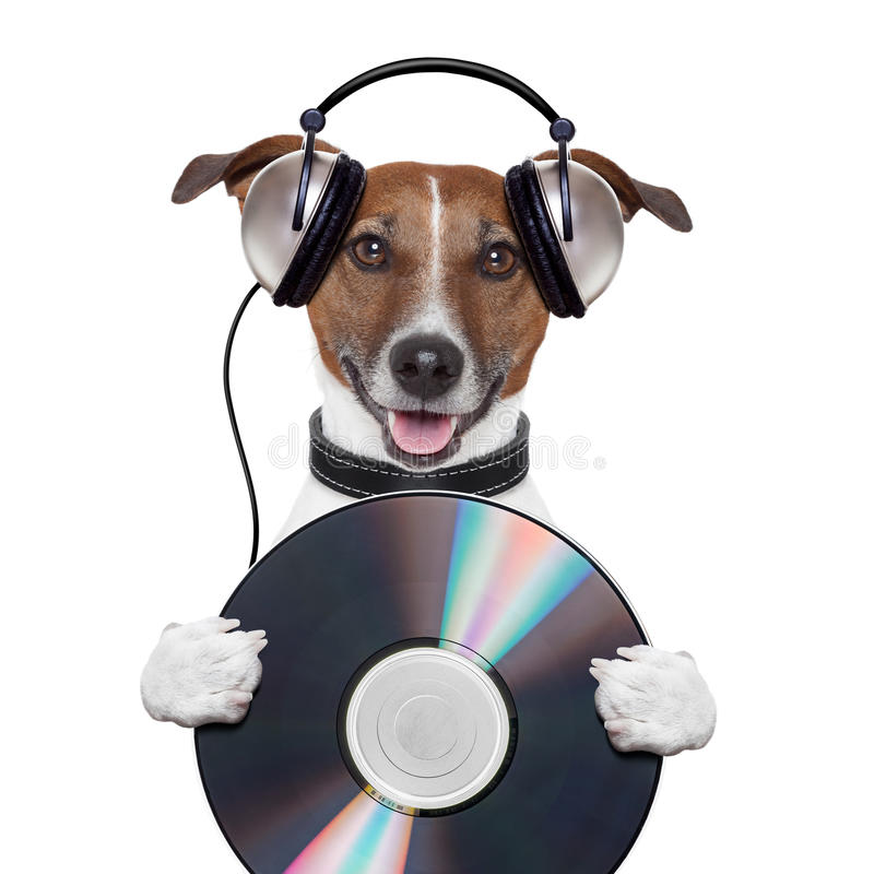 Perro del Cd del auricular de la música imágenes de archivo libres de regalías
