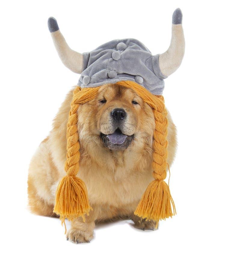 Perro del chow-chow con el sombrero de vikingo foto de archivo