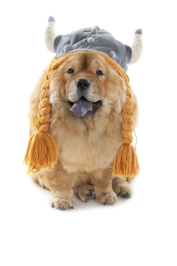 Perro del chow-chow con el sombrero de vikingo fotos de archivo libres de regalías