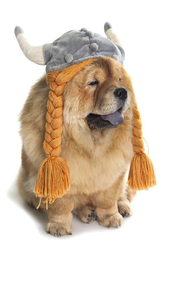 Perro del chow-chow con el sombrero de vikingo imágenes de archivo libres de regalías