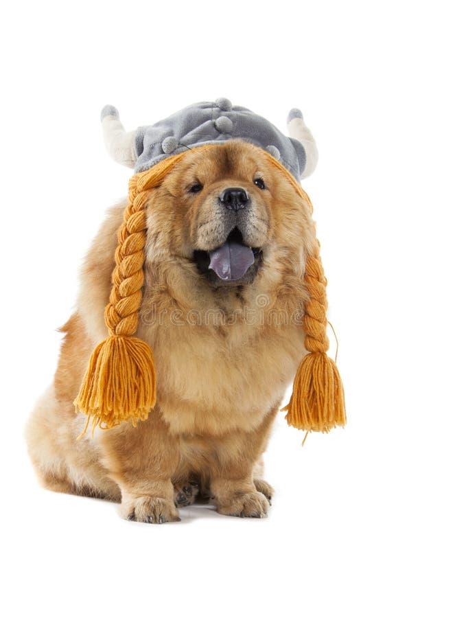 Perro del chow-chow con el sombrero de vikingo fotografía de archivo