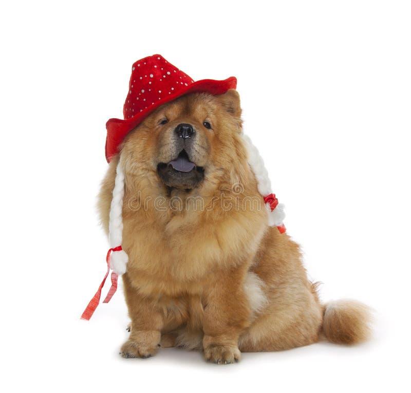 Perro del chow-chow con el sombrero rojo imagen de archivo