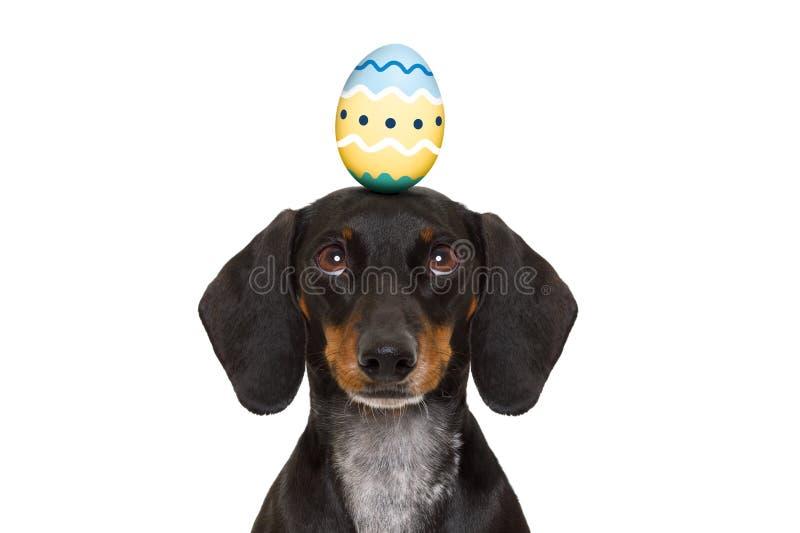 Perro del conejito de pascua con el huevo imágenes de archivo libres de regalías