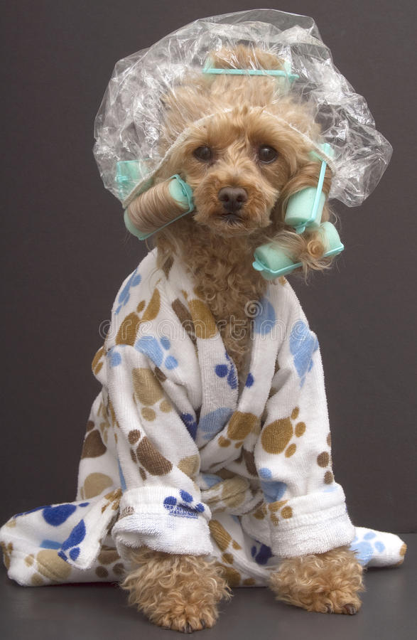 Perro del cuarto de baño imagen de archivo