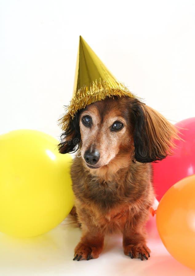 Perro del cumpleaños imagen de archivo libre de regalías