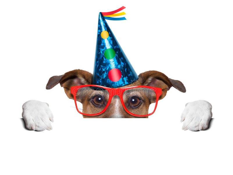 Perro del cumpleaños foto de archivo libre de regalías