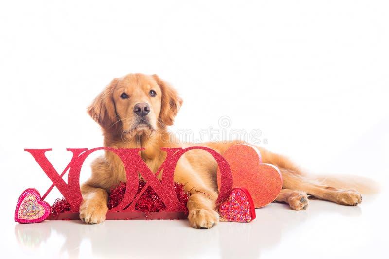 Perro del día de tarjeta del día de San Valentín imágenes de archivo libres de regalías