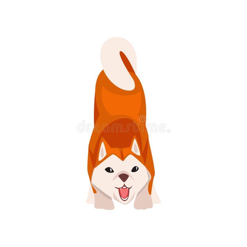 Perro del descortezamiento Shiba Inu, animal de animal doméstico mullido lindo de Japón, Front View Vector Illustration stock de ilustración