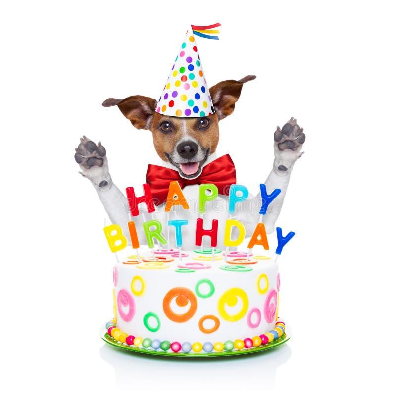 Perro del feliz cumpleaños foto de archivo libre de regalías