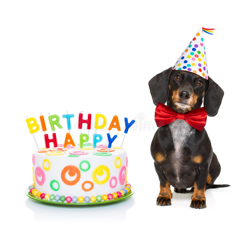 Perro del feliz cumpleaños foto de archivo