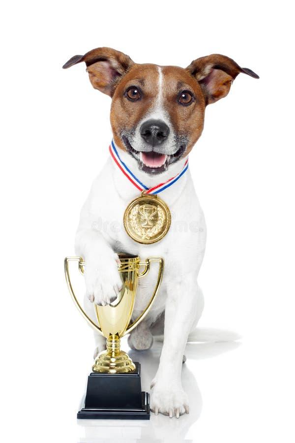 Perro del ganador foto de archivo libre de regalías